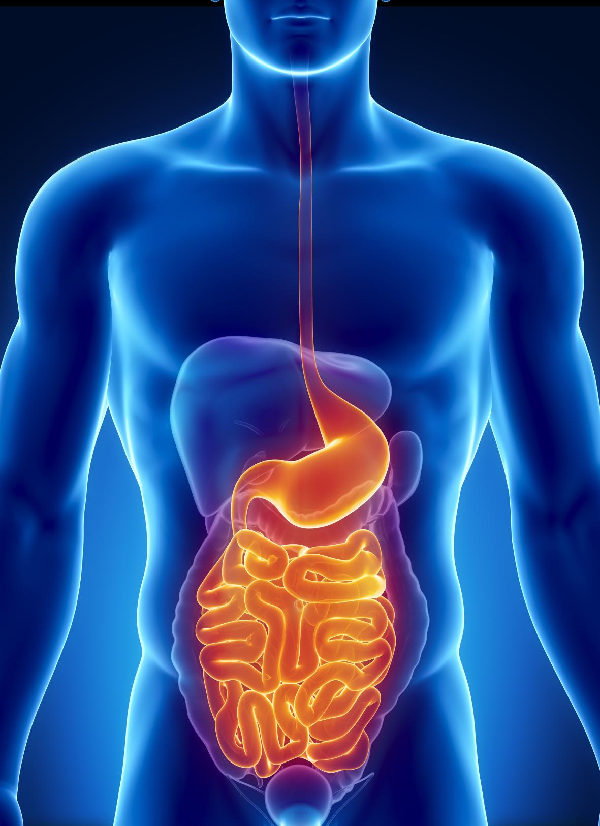 Die Bauchregion, das Vitalitätszentrum des Körpers